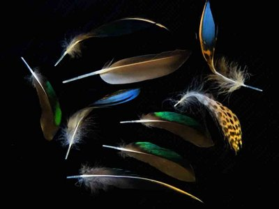 Blue Winged Teal feather feathers bird (2)