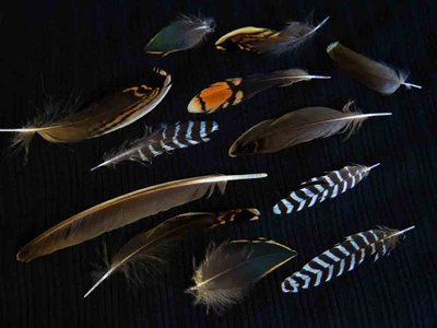 Common Snipe feather feathers bird