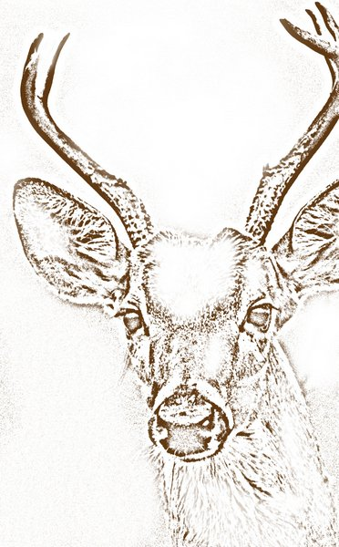 Whitetail Deer Coloring Pages - Get Coloring Pages   600x372
