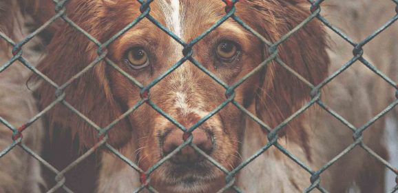 7 Things to Know before Adopting A Dog Who Has Experienced Trauma