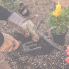 Essential Tools Every DIY Gardener Should Have