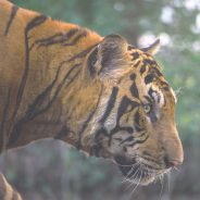 Wildlife of India: Exploring the National Parks and Wildlife Sanctuaries of Rajasthan