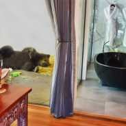 Jamala Wildlife Lodge: A Room with a Zoo