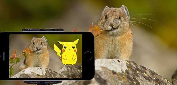 Go and Find The Real Pikachu