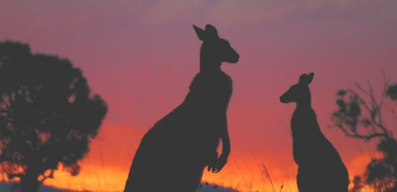Best Places to Spot Iconic Australian Wildlife in the Wild