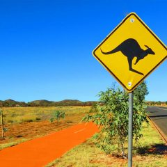 Australia's Greatest Road Trips for Wildlife