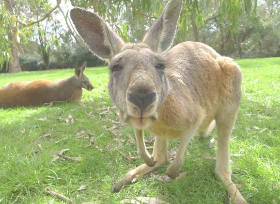 Top National Parks in Australia for Wildlife Lovers
