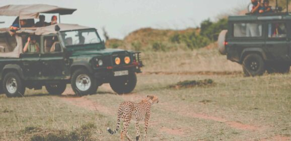 Unique Virtual Wildlife Tours to Experience at Home
