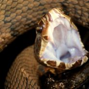 Photographing Snakes in the Wild