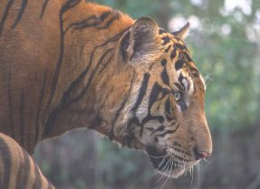 Best Countries to See Big Cats in the Wild