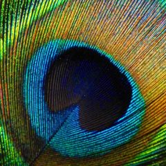 The Nature & Beauty of Bird Feathers
