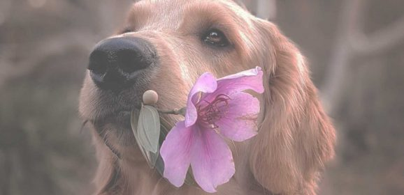 Common Types of Dog Allergies and Their Remedies