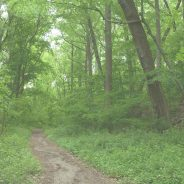 Most Beautiful and Unique Hiking Trails in Indiana