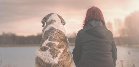 How to Travel With Your Emotional Support Animal