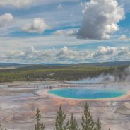Travel to Yellowstone: A Wildlife Guide to the Park's Most Interesting Animals